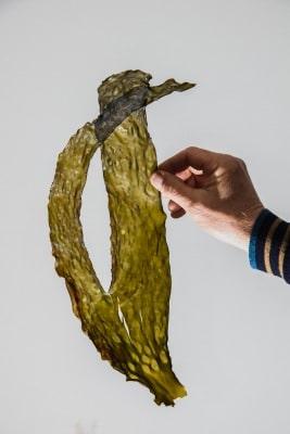 Algues - Ferme Marine du Croisic (c) Paul Stefanaggi