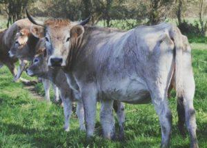 Les bottes boucherie artisanale vache nantaise